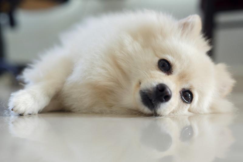 Bodelning hund